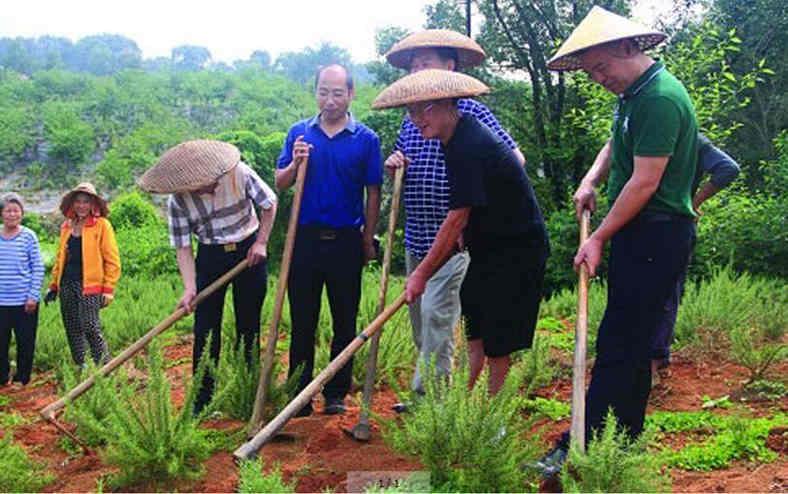 中国工程院院士调研组来益阳市调研芳香中药材项目